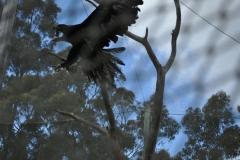 Eagle Flight Aviary