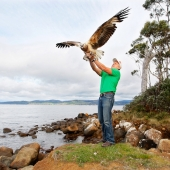 07/10/2012 NEWS: Release of a juvenile female sea eagle at Verona Sands by Craig Webb from the Raptor and Wildlife Refuge of Tasmania.