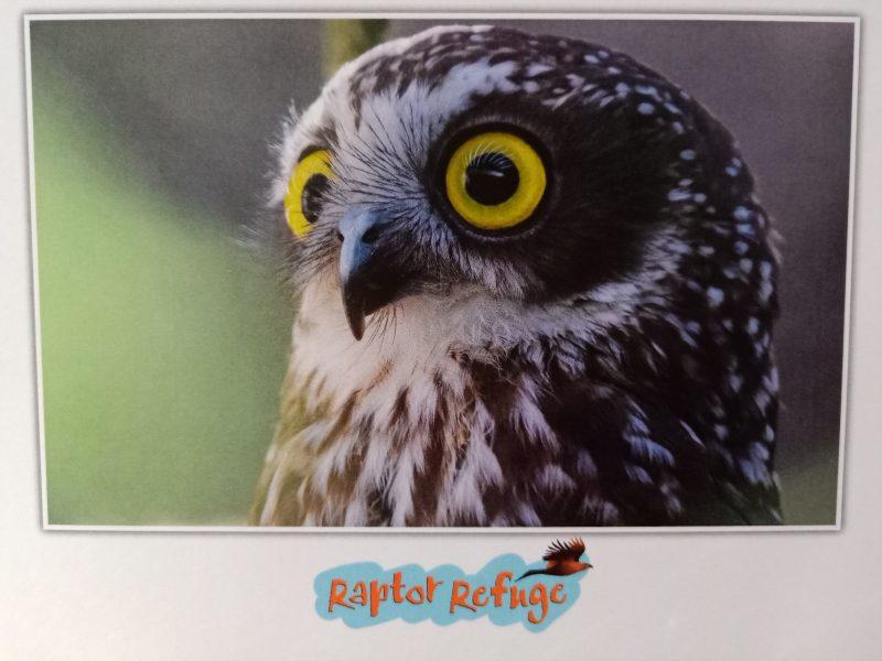 Boobook Owl Gift Card