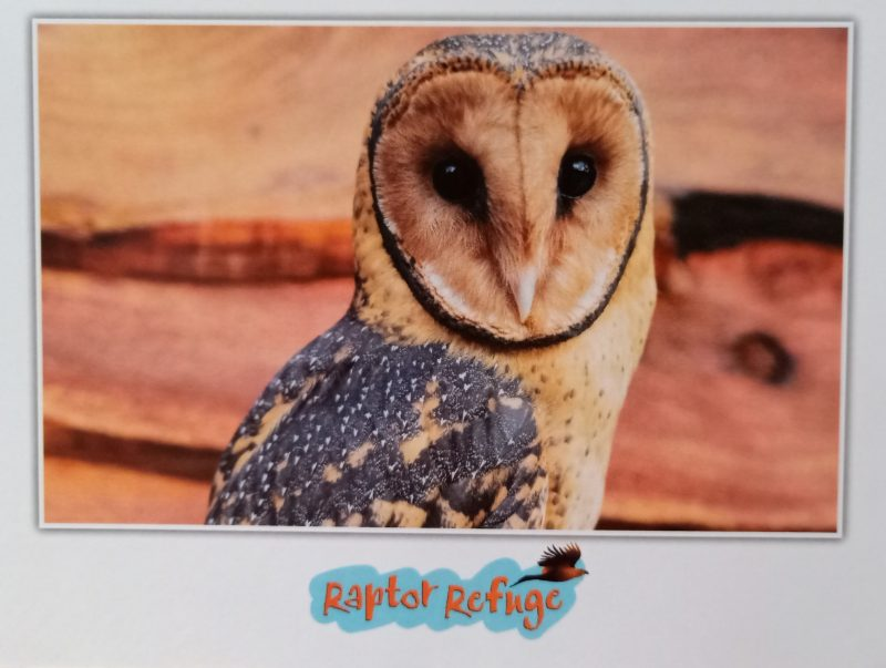 Montgomery the Masked Owl Gift Card