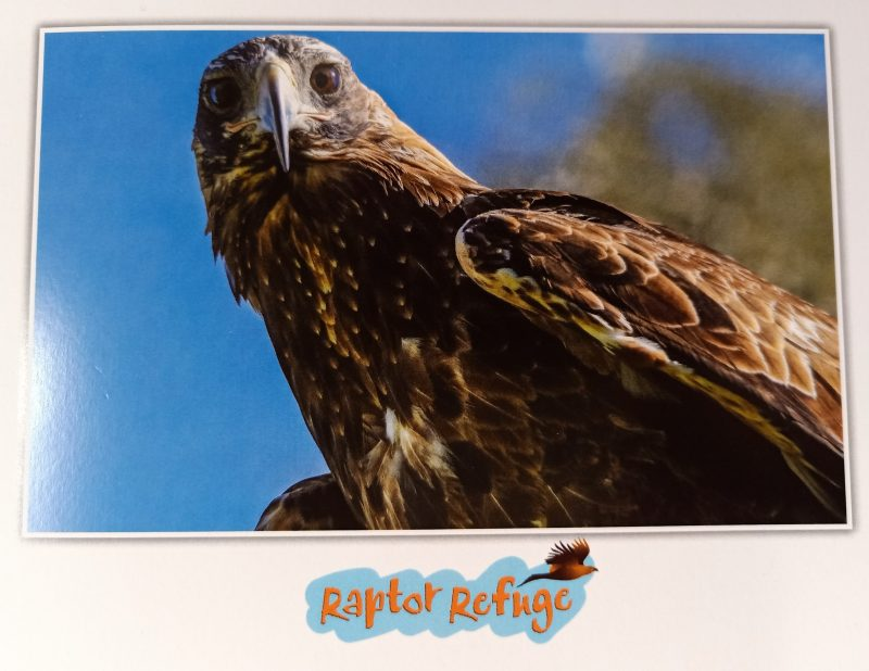 Wedge-tailed Eagle Gift Card (1)