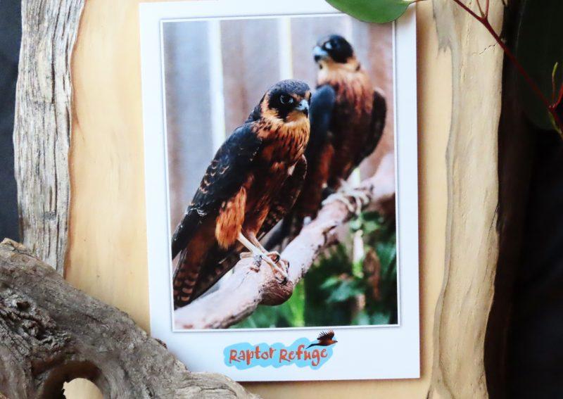 Australian Hobby Gift Card 01