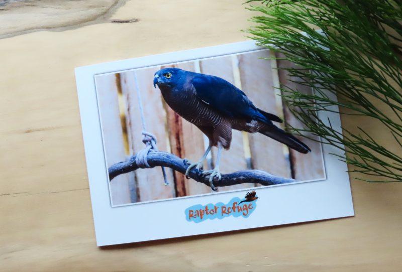 Brown Goshawk Gift Card 02