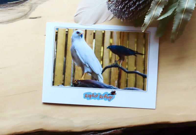 Grey Goshawk Gift Card 02
