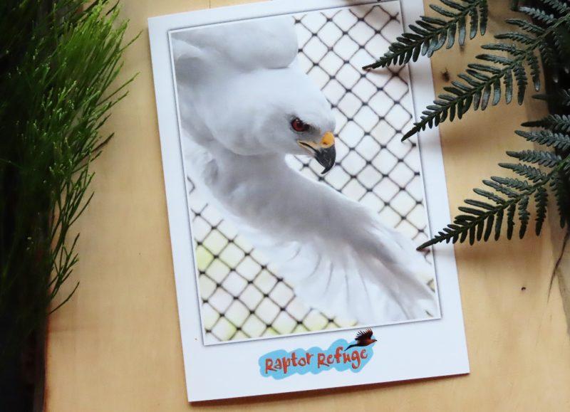 Grey Goshawk Gift Card 03