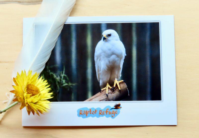 Grey Goshawk Gift Card 01