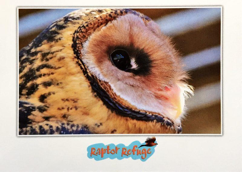 Masked Owl Gift Card 02