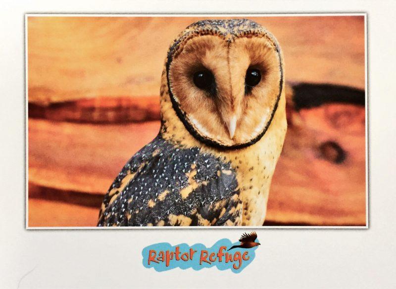 Masked Owl Gift Card 04
