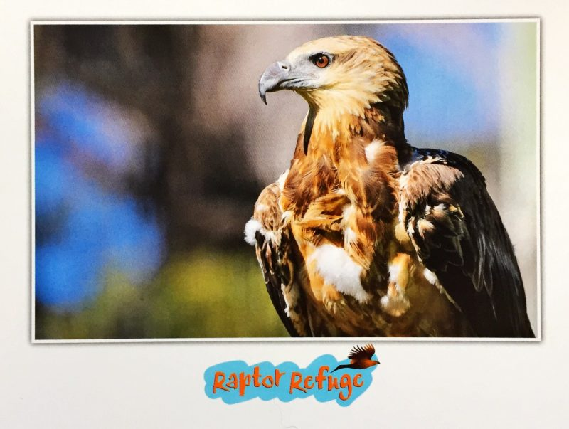 White-Bellied Sea Eagle Gift Card 01