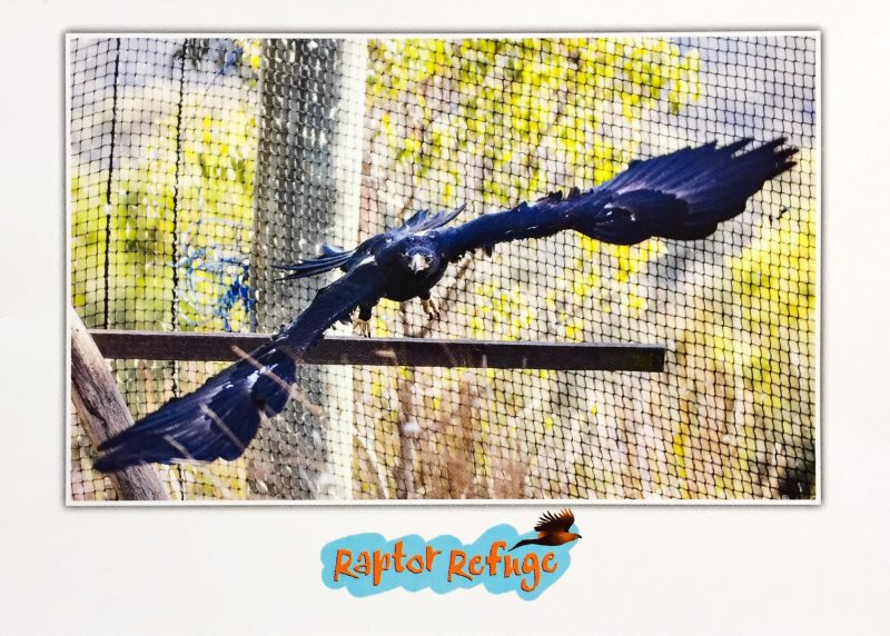 Wedge-Tailed Eagle Gift Card 02