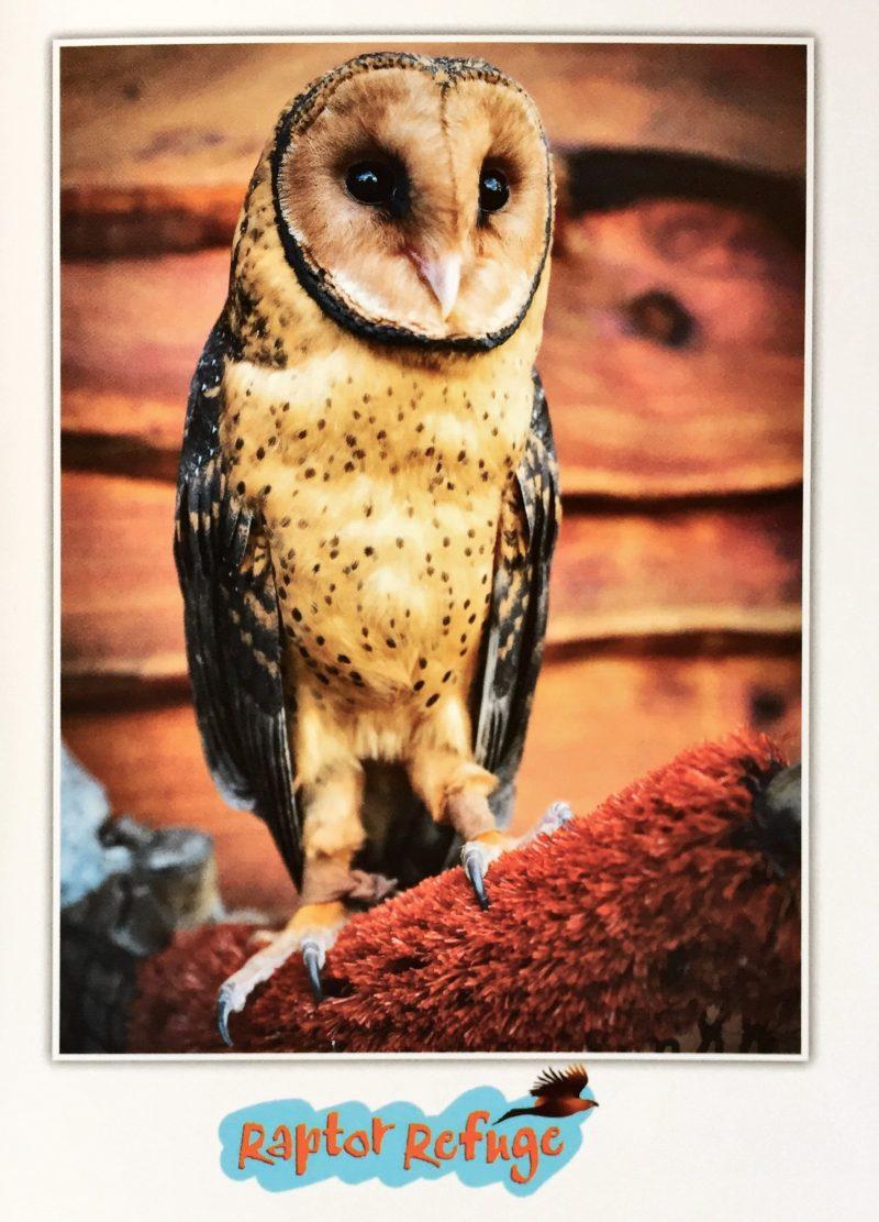 Masked Owl Gift Card 06