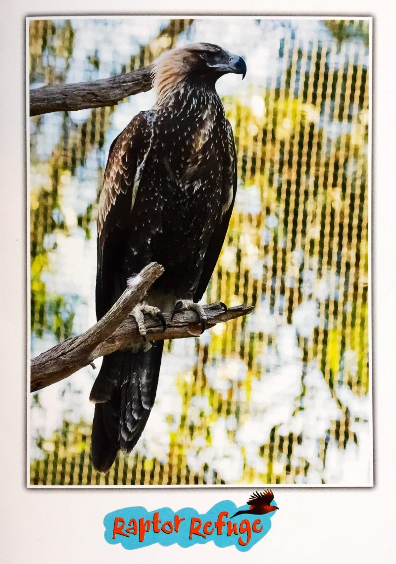 Wedge-Tailed Eagle Gift Card 01