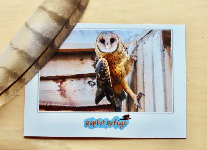 Masked Owl Gift Card 01