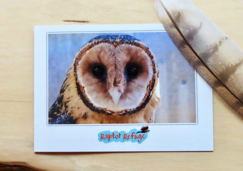 Masked Owl Gift Card 03