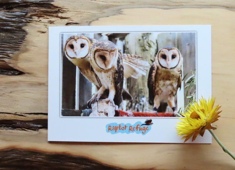 Masked Owl Gift Card 05