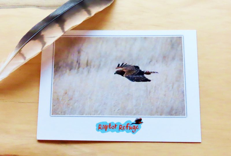 Swamp Harrier Gift Card 01