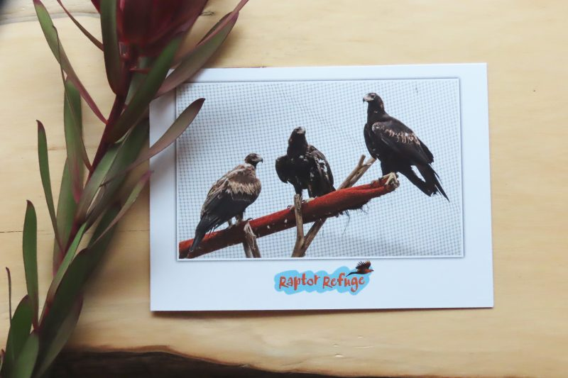 Wedge-Tailed Eagle Gift Card 05