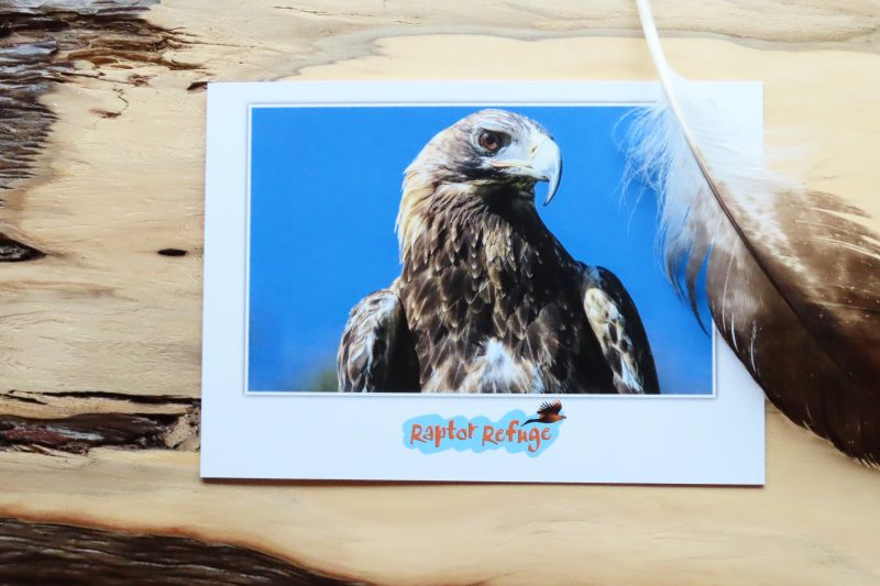 Wedge-Tailed Eagle Gift Card 06