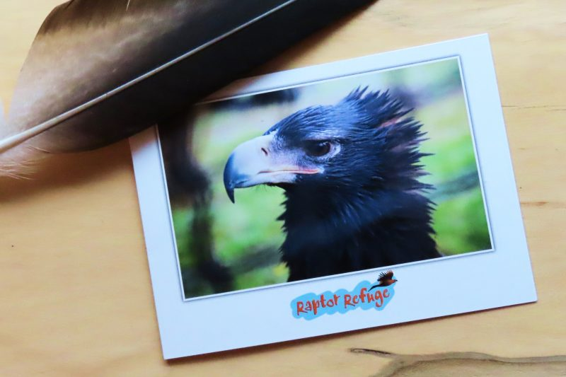 Wedge-Tailed Eagle Gift Card 03